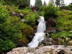 20190709-115632-00940-A Bach im Alpbachtal (hugoholunder) Tags: wald wasser steine himmel bäume gras blumen wasserfall tirol alpbachtal österreich