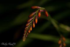 into the garden (kanti83) Tags: garden light colours plants