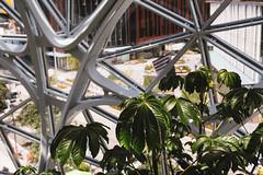 Amazon Spheres 2019 - 02 ([50storms]) Tags: canon6d canon2470mmf28l vsco vscofilm04 seattle washington pnw pacificnorthwest amazon amazonspheres landscapearchitecture architecture design plants garden