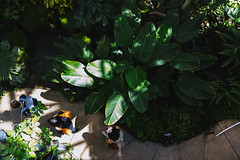Amazon Spheres 2019 - 03 ([50storms]) Tags: canon6d canon2470mmf28l vsco vscofilm04 seattle washington pnw pacificnorthwest amazon amazonspheres landscapearchitecture architecture design plants garden