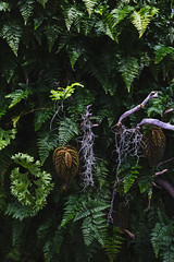Amazon Spheres 2019 - 06 ([50storms]) Tags: canon6d canon2470mmf28l vsco vscofilm04 seattle washington pnw pacificnorthwest amazon amazonspheres landscapearchitecture architecture design plants garden