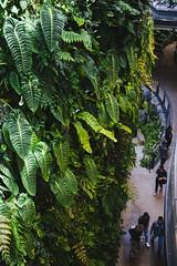 Amazon Spheres 2019 - 07 ([50storms]) Tags: canon6d canon2470mmf28l vsco vscofilm04 seattle washington pnw pacificnorthwest amazon amazonspheres landscapearchitecture architecture design plants garden