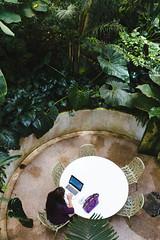 Amazon Spheres 2019 - 09 ([50storms]) Tags: canon6d canon2470mmf28l vsco vscofilm04 seattle washington pnw pacificnorthwest amazon amazonspheres landscapearchitecture architecture design plants garden
