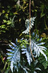 Amazon Spheres 2019 - 15 ([50storms]) Tags: canon6d canon2470mmf28l vsco vscofilm04 seattle washington pnw pacificnorthwest amazon amazonspheres landscapearchitecture architecture design plants garden