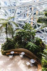 Amazon Spheres 2019 - 05 ([50storms]) Tags: canon6d canon2470mmf28l vsco vscofilm04 seattle washington pnw pacificnorthwest amazon amazonspheres landscapearchitecture architecture design plants garden