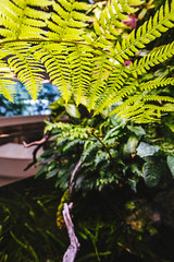 Amazon Spheres 2019 - 16 ([50storms]) Tags: canon6d canon2470mmf28l vsco vscofilm04 seattle washington pnw pacificnorthwest amazon amazonspheres landscapearchitecture architecture design plants garden