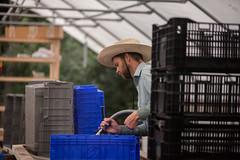TroyFarmWeek7-030 (troycommunityfarmwi) Tags: communitygroundworks csa communitysupportedagriculture community wisconsin wicsafarm farm farming madisoncsa farmforyoursupper organicfarming wi organic