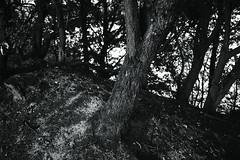 tree trunk@walking path 15 (Amselchen) Tags: tree monochrome plants blackandwhite bnw mono forest woods light shadow monotone sonyilce7rm2 sony sigma sigma19mmf28exdn