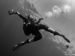Danseuse (penelope64) Tags: plongéesousmarine plongée dive bretagne brittany finistère ouessant mer merdiroise olympusem5 sousmarin fisheye panasonic8mmfisheye