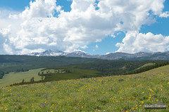 Above Buffalo Park (kevin-palmer) Tags: bighornmountains bighornnationalforest wyoming july summer backpacking nikond750 afternoon sky clouds sunny blue alpine wildflowers scenic view tamron2470mmf28