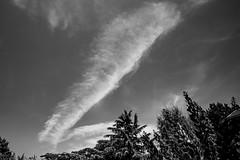 Puissante légèreté (Clydomatic) Tags: ciel nuage arbre