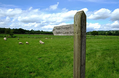 DSCF3694_4264 (Adam Swaine) Tags: cumbria northeast signs roadsigns rural england english englishlandscapes beautiful fields britain british englishfields walks uk ukcounties counties countryside sheep flockofsheep 2019