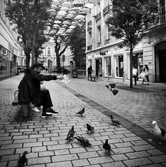 Feeding the pigeons (f22photographie) Tags: liverpoolcitycentre birds wildbirds pigeons feedingtime streetscene pavement cityscene citylife nikkorn24mmf28 nikonkogaku