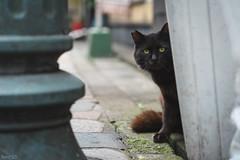 猫 (fumi*23) Tags: ilce7rm3 sony street sel85f18 85mm fe85mmf18 a7r3 animal alley cat gato neko emount ねこ 猫 ソニー