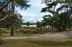 Lange Duinen - Soester Duinen (joeke pieters) Tags: 1480890 panasonicdmcfz150 soesterduinen langeduinen utrechtseheuvelrug utrecht nederland netherlands holland zandverstuiving sanddrift duinen dunes landschap landscape landschaft paysage driftingsand heuvelrugroutedendolder