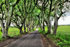 Bregagh Road NIR - Dark Hedges 10 (Daniel Mennerich) Tags: darkhedges bregaghroad ireland canon dslr eos hdr hdri spiegelreflexkamera slr vereinigteskönigreich unitedkingdom uk royaumeuni reinounido
