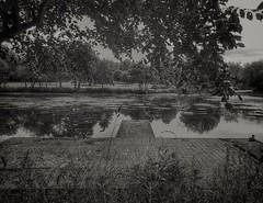 198/365 (Charlie Little) Tags: carlisle cumbria blackandwhite bw pond hammondspond cameraphone mobilephotography huaweip20pro leica p365 project365
