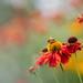 A little flower interlude!