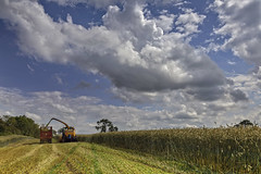 Rye n the sky (Alan10eden) Tags: wholecropping sky summer rye hybridrye alanhopps canon 5dmkiv 24105mm landscape field cerealsilage agriculture tractors farming winterfeed harvest cut chopping ulster newholland masseyferguson
