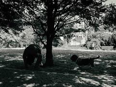Berliner #960 (.Dirk) Tags: berlin olympusxz2 street people hund dog bnw sw bw basset schöneberg
