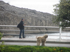 Photgrapher  and dog, Llanes, Asturias (d.kevan) Tags: llanes asturias coast cliffs rocks railings man people photographer dogs sea sablonbeach path tree afghan