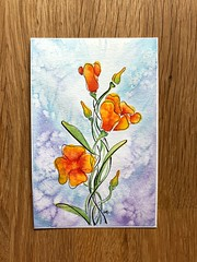 California Poppies (alisonleighlilly) Tags: sketch ink blossom summer californiapoppies poppies floral flowers painting watercolor