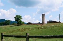 Bath County, VA (nataliekrovetz) Tags: film farm rural horse donkey analog nikonfm2 bathcounty virginia landscape farmanimals silo sky clouds