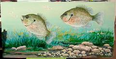 Spotted Sunfish (M.P.N.texan) Tags: art wildlife acrylic acrylics fish sunfis spottedsunfish bluntnosedarter blacktailshiner underwater handpainted original mpn