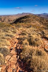 Mt Sonder walk - further down (NettyA) Tags: australia centralaustralia larapintatrail mtsonder mtsonderwalk nt northernterritory tjoritjiawestmacdonnellnationalpark worldexpeditions bushwalk bushwalking hike triodia spinifex track path rocky