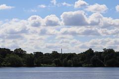 IMG_2655 (intimaralem85) Tags: saintpaul minnesota comolake lake wild wilderness birds plants flowers summer