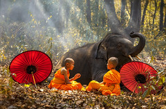 Novices or monks spread red umbrellas and elephants. Two novices sit and talk, and a large elephant with forest background, Tha Tum District, Surin, Thailand (pomp_jaideaw) Tags: elephant monk novice people person travel male traditional culture asian asia religion thailand buddhism buddha forest tree tranquil thai alms nature symbol adult orange background young outdoors red tourism scene wild wildlife sitting mammal national large animals buddhist indigenous praying umbrellas mahout walking spread summer outdoor grass surin green