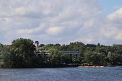IMG_2650 (intimaralem85) Tags: saintpaul minnesota comolake lake wild wilderness birds plants flowers summer