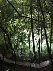 Jungle (Harald Groven) Tags: kinaferie2019 picture jungle forest rainforest green skog urskog trær trees tree