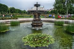 Volksgarten Vienna with Burgtheater in Background (WS Foto) Tags: wien vienna austria österreich volksgarten brunnen rosen springbrunnen fountain burgtheater seerosen europe eu waterlilies roses garden park