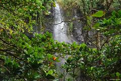 Sainte-Rose, anse des Cascades (philippeguillot21) Tags: sainterose ansedescascades verdure réunion france outremer océanindien indianocean afrique africa pixelistes nikon