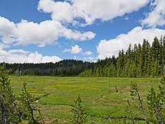 tb1180737AlpineMeadow (thom52) Tags: thom hiking mountain biking broken top todd lake central oregon bend
