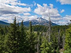 tb1180577SnagPlusBachelor (thom52) Tags: thom hiking mountain biking broken top todd lake central oregon bend