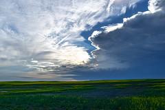 Split between the supercell clouds (darletts56) Tags: sky blue cloud clouds supercell storm field fields farm grass wheat white grey green rain saskatchewan canada country prairie sunset yellow canola