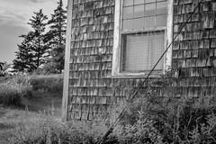 homestead, weathered facade, Port Clyde, Maine, Nikon D3300, nikon nikkor 50mm f-2, 7.16.19 jpg (steve aimone) Tags: homestead shingled weathered sprucetrees portclyde maine nikond3300 nikonnikkor50mmf2 architecture architecturalforms blackandwhite monochrome monochromatic