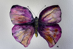 butterfly (mariola aga) Tags: watercolor butterfly painting art mywork paper texture rough arches holbein