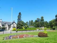 """""""The Peacock"""", Grant Park, Forres, June 2019 (allanmaciver) Tags: peacock forres moray trees flowers topiary scotland houses green colours nice day allanmaciver"""