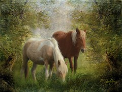 Horses in a Meadow....(Explored) (Patlees) Tags: horses textured lenbemanna thank you kathyrussellshorses explored