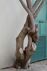 (copyriot) Tags: telaviv tree israel hinterfof abstract formal