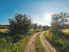 Endless Country (Leif Junghans) Tags: country land deutschland lürschau schleswig flensburg wald wiese acker koppel