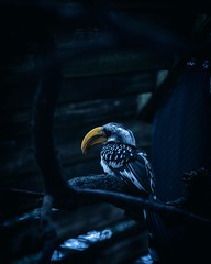 Lookout (mexicanonastick119) Tags: beautiful tones cool moody beak birds bird nature