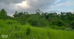 Peace around You (Stefan Beckhusen) Tags: flores indonesia paci graveyard cemetry graves tombstone nature jungle mountains lifestyle grass grassland hill color green day