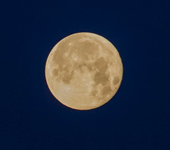 The moon at 04.15 AM (frankmh) Tags: moon night earlymorning hittarp sweden