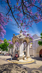 _DS16649 - Blooming Jacaranda, Lisbon (AlexDROP) Tags: 2019 portugal lisboa lisbon europe art travel architecture color wideangle city flower square people nikond750 tamronaf1735mmf284diosda037 best iconic famous mustsee picturesque postcard circpl