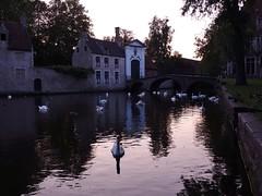 Le lac des cygnes (Iris@photos) Tags: belgique flandres bruges béguinage lac cygne
