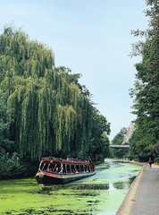Willows of London Zoo (marc.barrot) Tags: shotoniphone willows trees landscape narrowboat canal uk nw1 london camden regent'spark zsllondonzoo regent'scanal